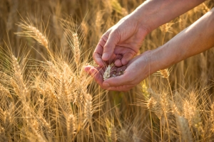 "March is the Hebraic month of Nisan/Aviv.  In Bible days, this is the month to harvest barley and wave the barley before the Lord as a ""wave offering""."